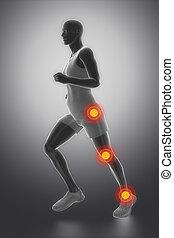 anatomia, biodro, kostka, kolano połączenie