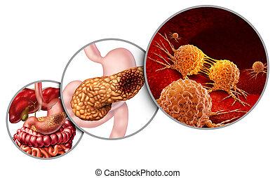 anatomia, cancro, pancreas
