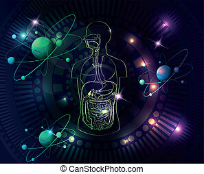anatomia, coloridos, human, fundo