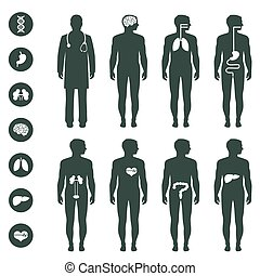 anatomia, corpo humano