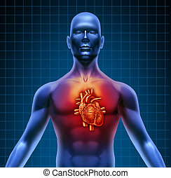 anatomia, cuore, torso, rosso, umano