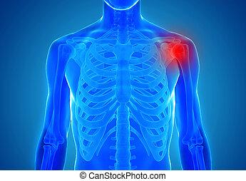 anatomia, de, human, junções, -, ferimento, conceito