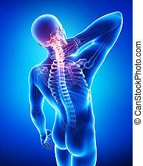 anatomia, de, macho, dor pescoço, ligado, azul
