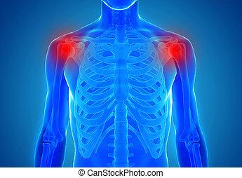 anatomia, de, ombro humano, junções, -, ferimento, conceito