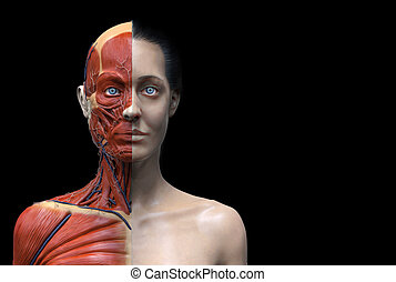 anatomia, donna, fondo
