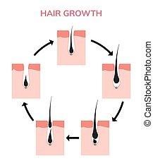 anatomia, follicle cabelo, ilustração, anagen, crescimento,...