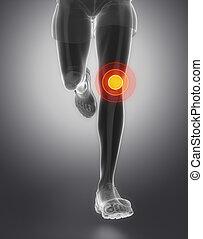 anatomia, ginocchio