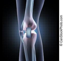 anatomia, kolano