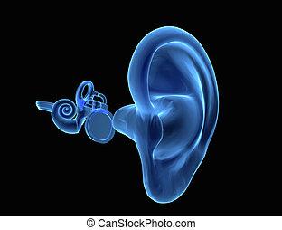 anatomia, orecchio, umano, 3d