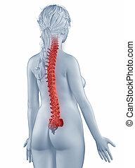 anatomia, posteriore, isolato, posizione, spina, donna, vista