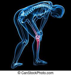 anatomia, pretas, dor, femininas, joelho