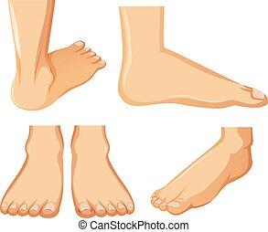 anatomia, stopa, białe tło, ludzki