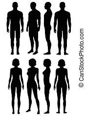 anatomia, vista, corpo humano, costas, lado, frente