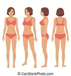 anatomia, vista lateral, human, frente, costas, corporal