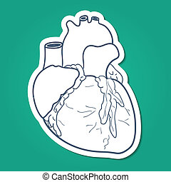 Anatomical heart human organ. - Sketch sticker vector...