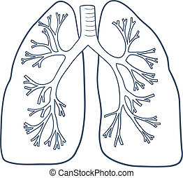 Anatomical lungs isolated on white. - Sketch vector element...