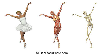 A 3D render of a ballet dancer, with muscles and skeleton. These images will line up exactly, and can be used to study anatomy.