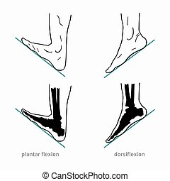Anatomical terms of foot joint motions - Plantar flexion, ...