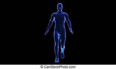 anatomie, body:, menselijke huid