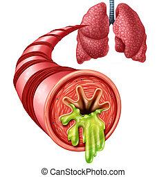 anatomie, concept, bronchite