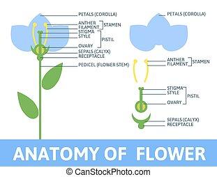 anatomie, détail, flower.