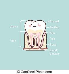 anatomie, dent, diagramme, dessin animé