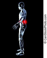 anatomie, douleur, -, dos