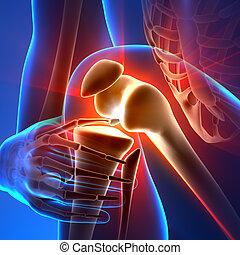 anatomie, genou, rayons, -, douleur