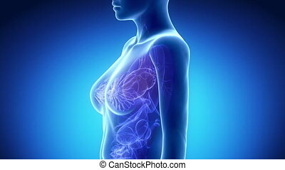 anatomie, hart, blauwe , vrouwlijk