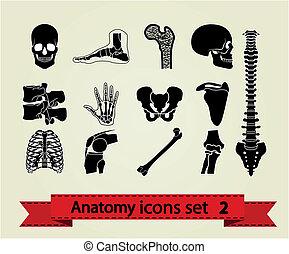 anatomie, iconen, set, 2
