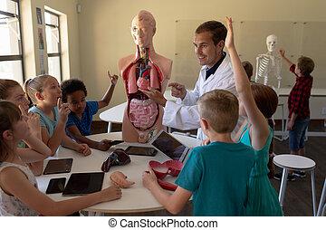 anatomie, laboratoř, pouití, mužský, vzor, učitelka, plášť, ...