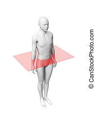 anatomie, lichaam, laag, -, menselijk