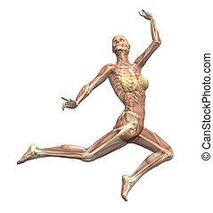 anatomie, mouvement