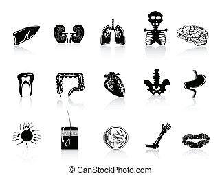 anatomie, noir, humain, icône