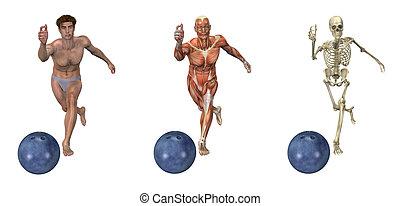 anatomisch, overlays, -, sportkegeln