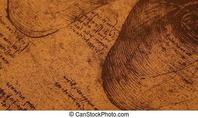 Anatomy art - 14th century anatomy art by Leonardo Da Vinci...