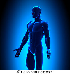 Anatomy Body - Iso View - Blue conc
