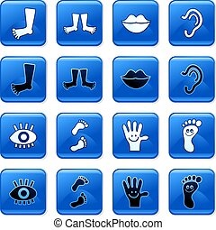 collection of blue square glossy anatomy rollover buttons isolated on white