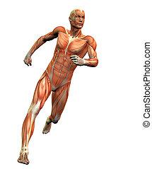 anatomy man #3 - anatomy man w/ clipping mask