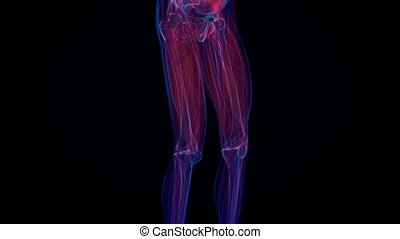 anatomy., menselijk, rontgen, skelet