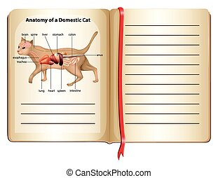 Anatomy of a domestic cat