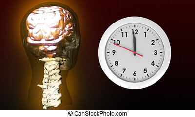 Anatomy of head and clock - Digitally generated animation of...