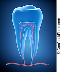 Anatomy of healthy teeth in details. , x-ray view