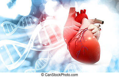 Anatomy of Human Heart with DNA structure background. 3d ...