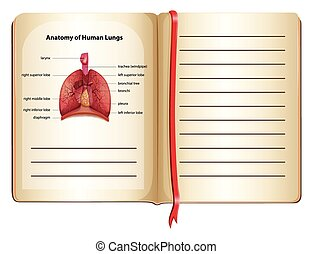 Anatomy of human lungs on the page