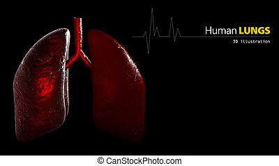 Anatomy of Human Lungs