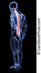 Anatomy of male back pain on black