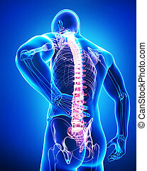 3d rendered illustration of male back pain anatomy on blue