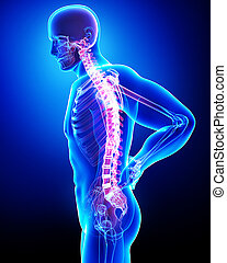 Anatomy of male back pain on blue