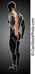 Anatomy of male back pain on gray